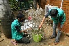 cuci-lampu-kristal-ibu-ayu-reorder-32