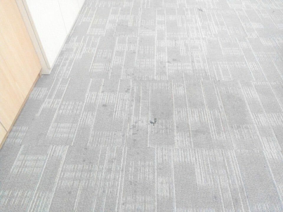 cuci-karpet-kantor_243