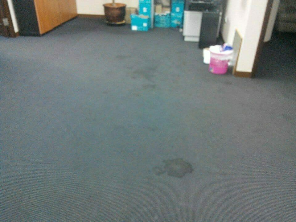 cuci-karpet-kantor_286